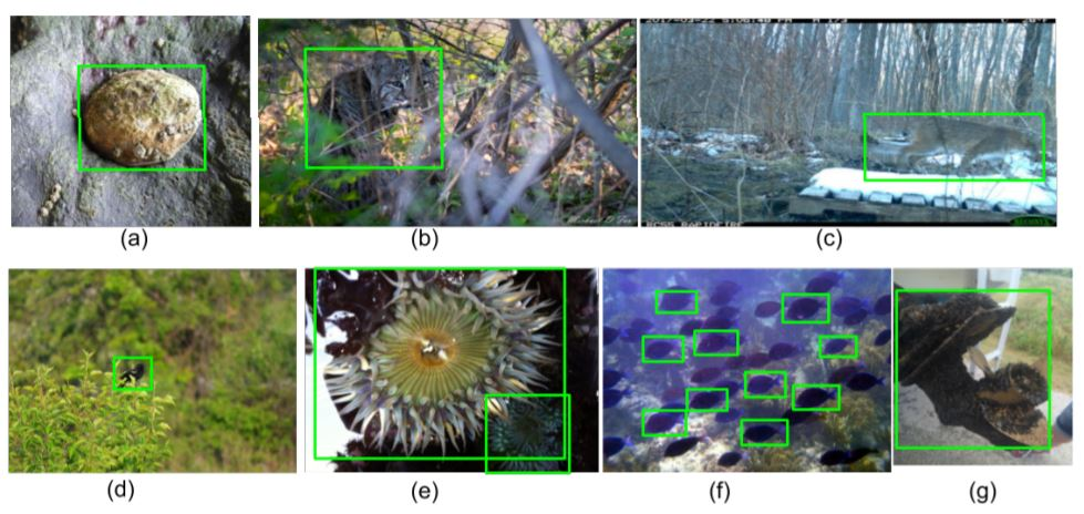 The iNaturalist Species Classification and Detection Dataset - image classification