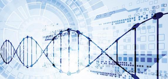 vectors DNA